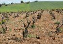 Découvrez les terroirs de l'Armagnac