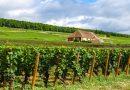 Le tour de France des amateurs de vin