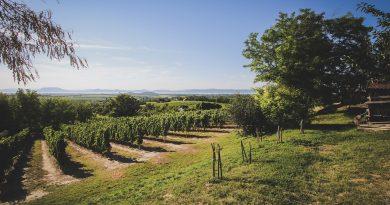Südsteiermark, Autriche : la route des vins du sud de la Styrie