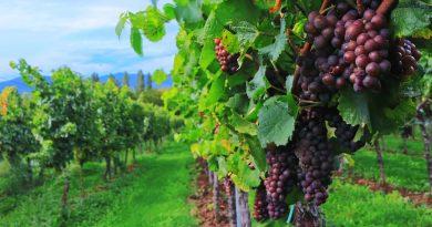 Découvrir la Vallée du Rhône et ses nombreux domaines viticoles.